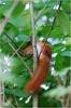 Zdjęcie 17 - Kwatery Agroturystyczne Pokoje u sołtysa - Dawidowizna