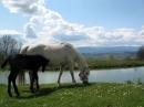 Zdjęcie 12 - Agroturystyka Szałas Muflon Jelenia Góra