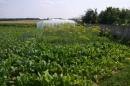 Zdjęcie 10 - Gospodarstwo Agroturystyczne Pod Modrzewiem - Bałtów - świętokrzyskie