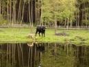 Zdjęcie 3 - Gospodarstwo Agroturystyczne Olchowy Młyn - Nowy Zatom koło Międzychodu