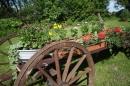 Zdjęcie 4 - Gospodarstwo Agroturystyczne HUBERTUS - Bogacko